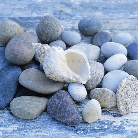 Snäcka bland stenar