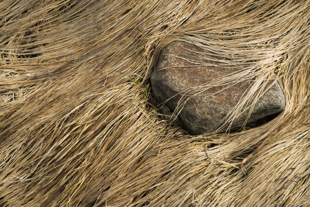 Sten i strandgräs