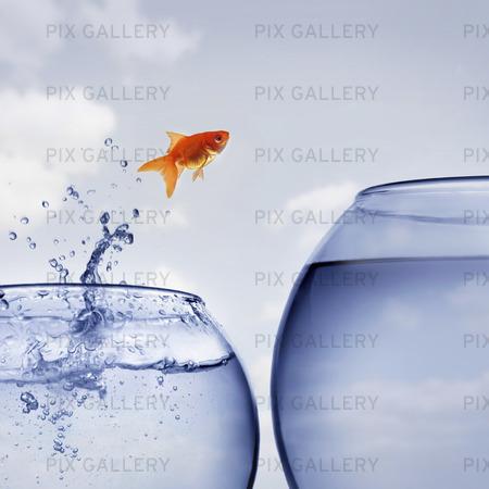 Guldfisk hoppar upp ur vattenskål