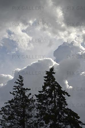Granar och moln
