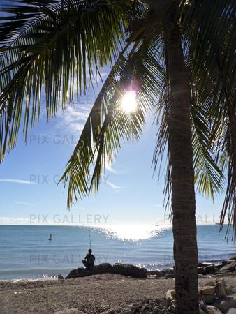Fiske. Key Biscayne. Miami. Florida. USA