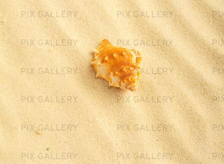 Snäcka på strand