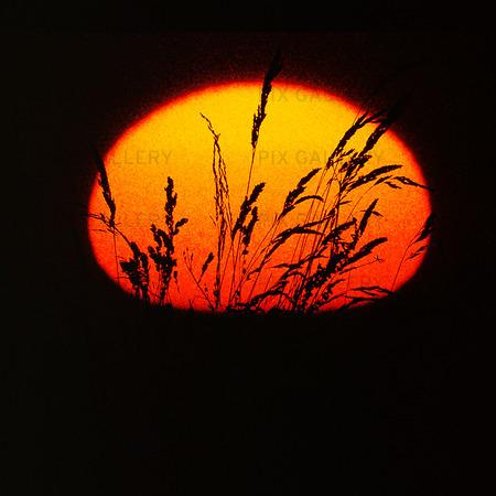 Grässtån i solnedgång (montage)