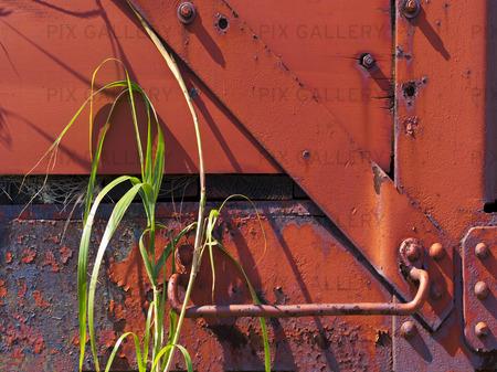 Gamla rostiga järnvägsvagnar