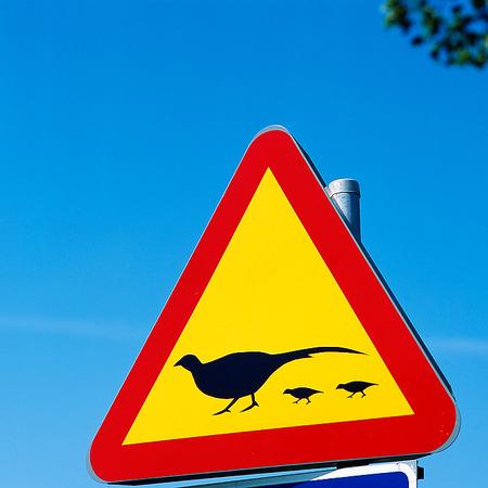 Övergångställe för fågel