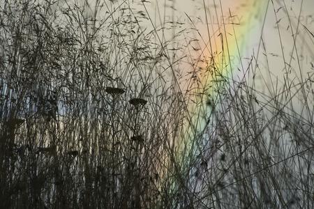 Regnbågen bakom gräset