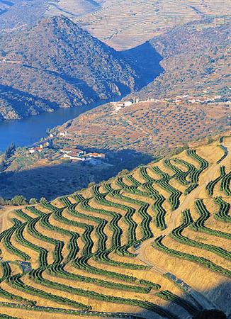 Vinodling vid floden Duoro, Portugal