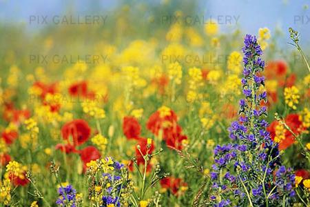 gratis foton på blommor