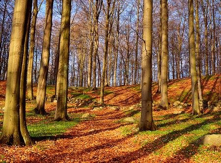 Vårskog