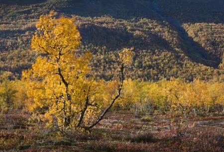 Höst i Abisko, Lappland