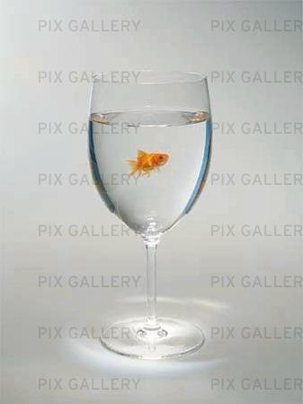 Guldfisk i glas