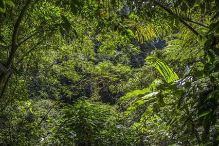 Regnskog, Filippinerna