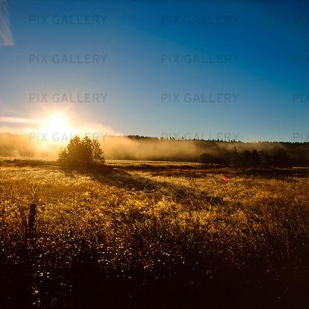 Soluppgång i naturlandskap