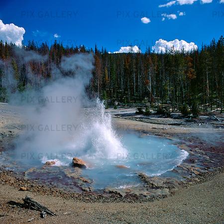 Echinus Gayser i Yellowstone National Park, USA