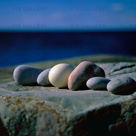 Eggs among rocks