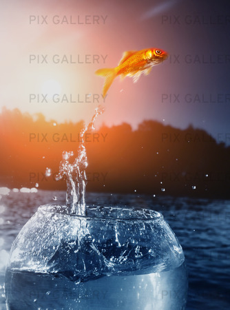 Guldfisk som hoppar ut till frihet