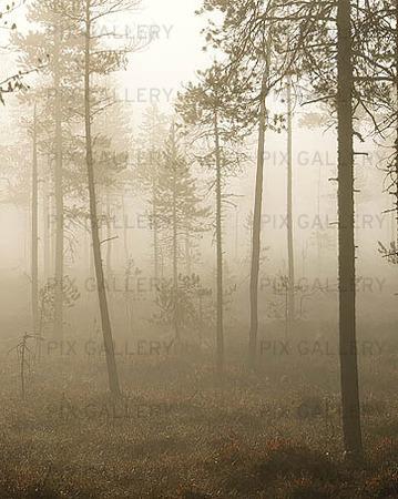 Dimma över myr