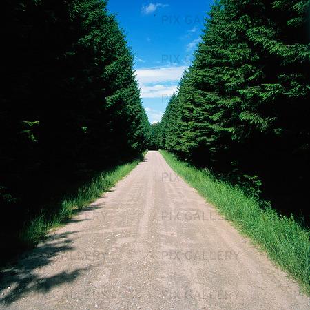 Rak grusväg genom skog