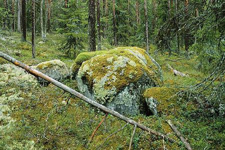 Sten med mossa i skog
