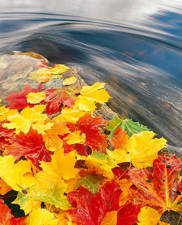 Höstlöv vid vattendrag