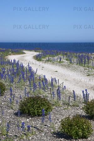 Kalkstensväg på Gotland