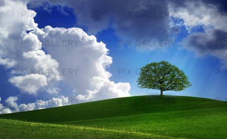 Ensamt träd på grön kulle