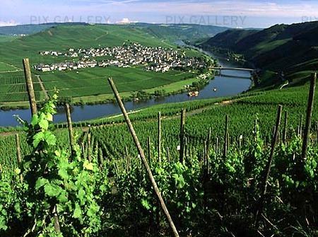 Vinodlingar i Moseldalen, Tyskland