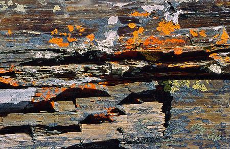 Skiffrad sten med lavar på