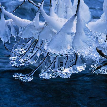 Is på trädgren