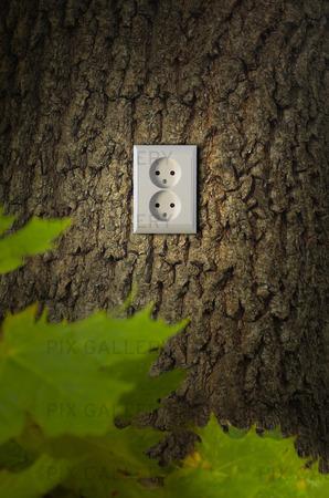Grön energi, eluttag i träd
