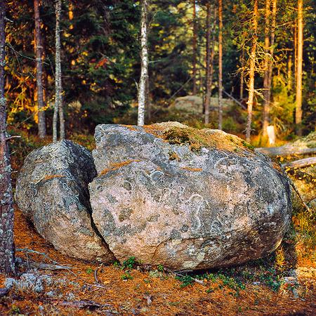 Kluven sten i skogen