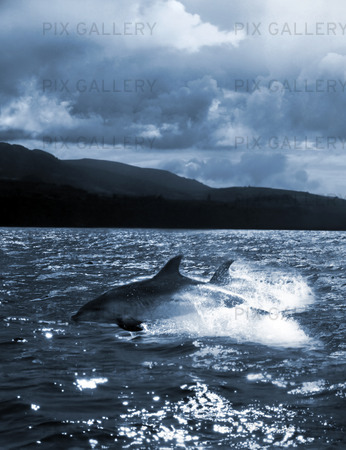 dolphin jump out of the water in the ocean