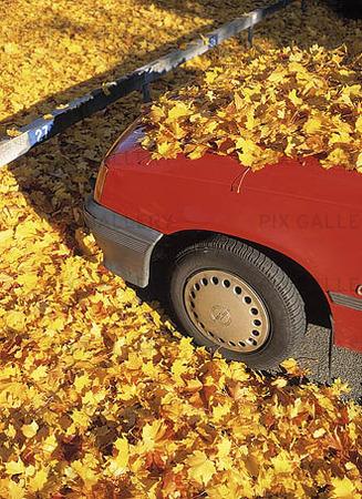 Höstlöv på parkerad bil