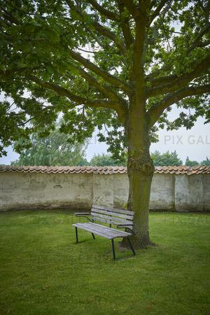 Parkbänk under träd
