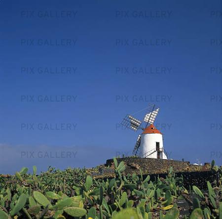 Väderkvarn vid kaktusfält, Lanzarote