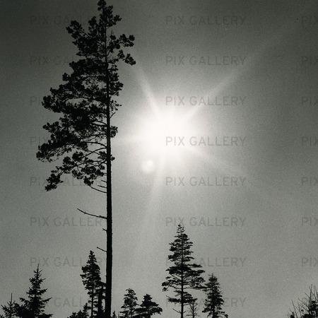 Solen i skogen