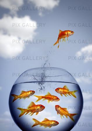 Guldfisk som hoppar