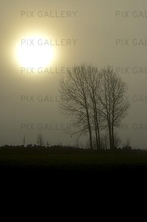 Sol och träd