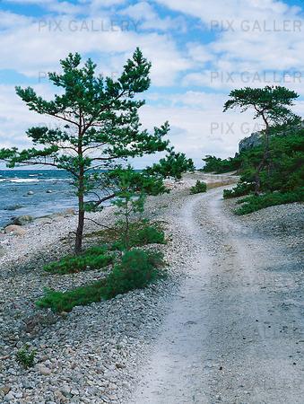 Väg vid kusten på Gotland