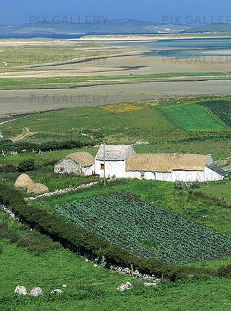Hus vid potatisodling, Irland