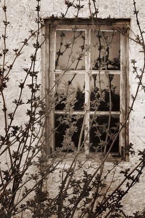 Växt framfor gammalt fönster