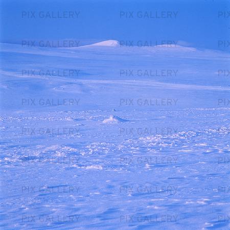 Vinterlandskap, Lappland