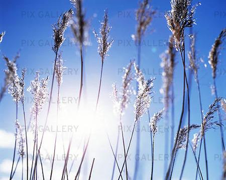 Sol i gräs