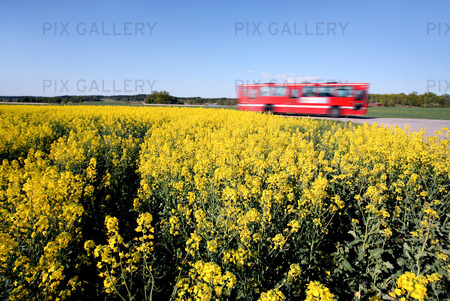 bus and Oilseed