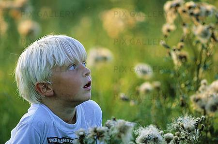 Pojke bland blommor
