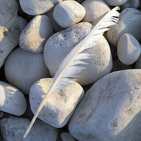 Fjäder på stenar