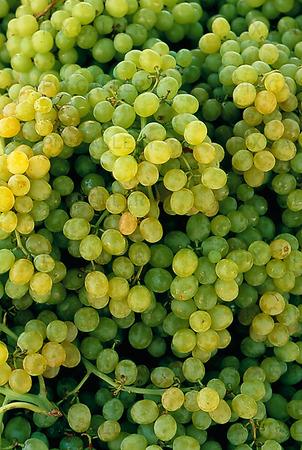Vindruvor