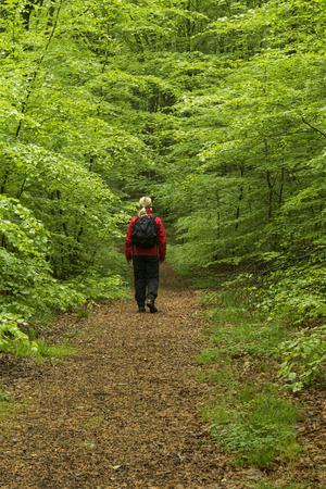 Vårpromenad i bokskog