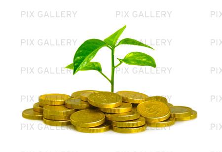 Pengar och en växt