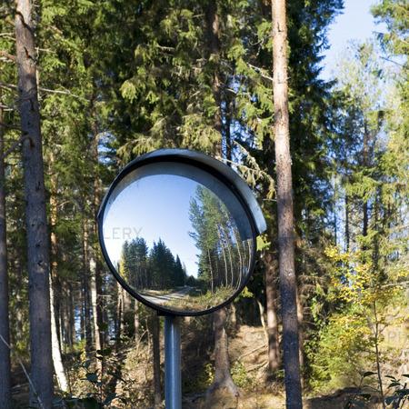 Trafikspegel i skogen